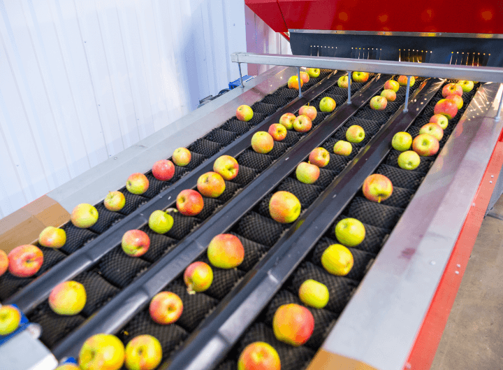 Vegetable sorting artificial intelligence